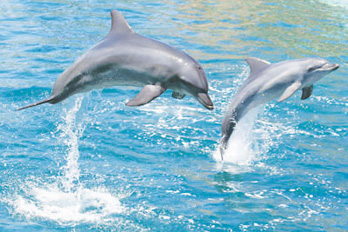 Dolphin Tours Tybee Island Ga